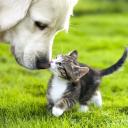 Agria Pet Insurance promo codes 2020