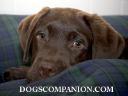 Dog's Companion